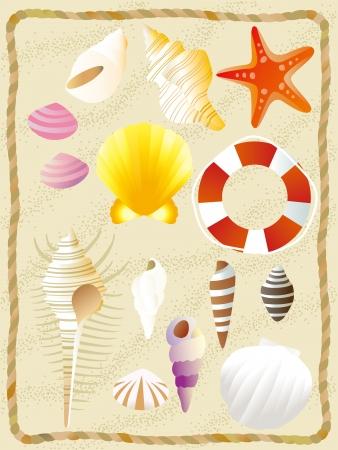 イラストは貝のコレクション