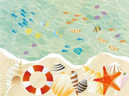 美しい貝や魚が存在ビーチ