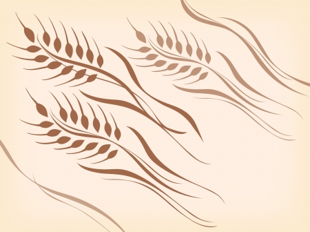 rice plant: Wheat of a beautiful curve   Illustration