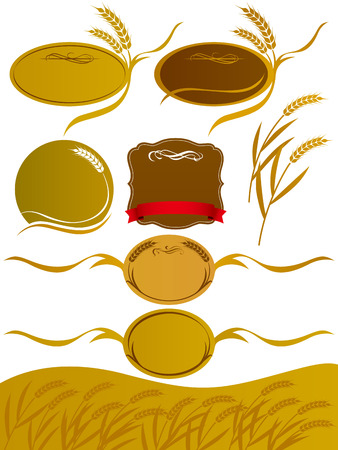 rice plant: The illustration of wheat Illustration