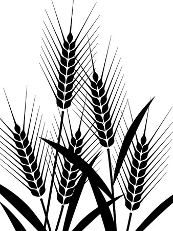 rice harvest: The illustration of wheat Illustration