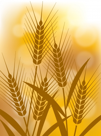 The illustration of wheat Vector
