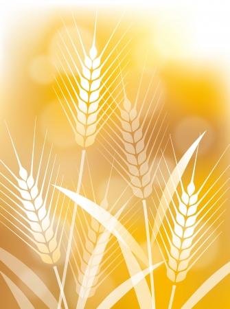 De illustratie van de tarwe