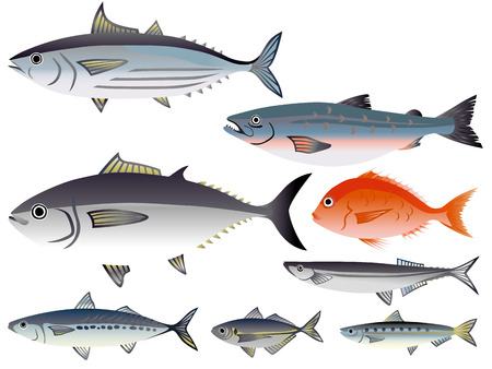 saury: Illustration of Fish in the market
