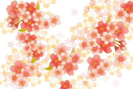 일본 사쿠라의 아름다운 벚꽃의 그림