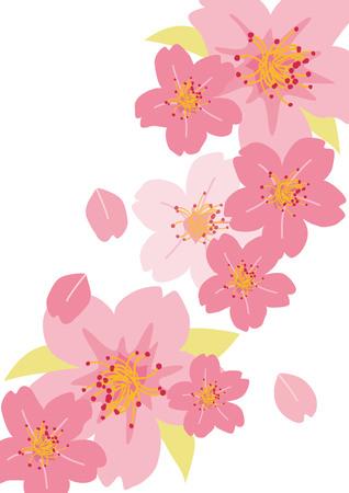 Illustration of beautiful cherry blossoms in Japan sakura