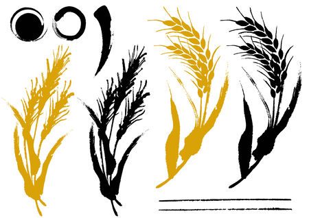 rice field: The illustration of wheat