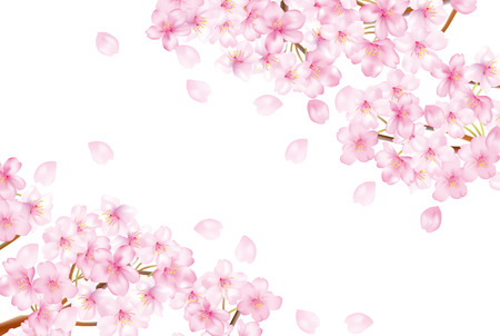 美しい桜の木のイラスト 写真素材