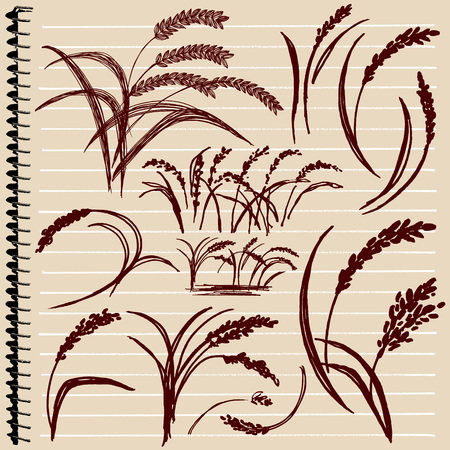 rice plant: Illustration of hand-painted rice