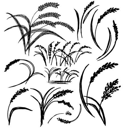 손으로 그린 쌀의 그림 일러스트
