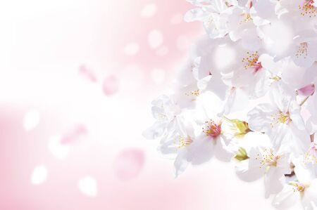 april beautiful: Beautiful cherry landscape