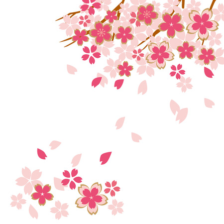 Beautiful cherry blossoms of Japan