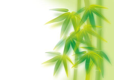 bambu: ilustración de bambú