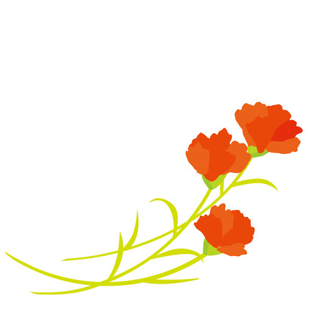 carnations: Carnation on Mothers Day.
