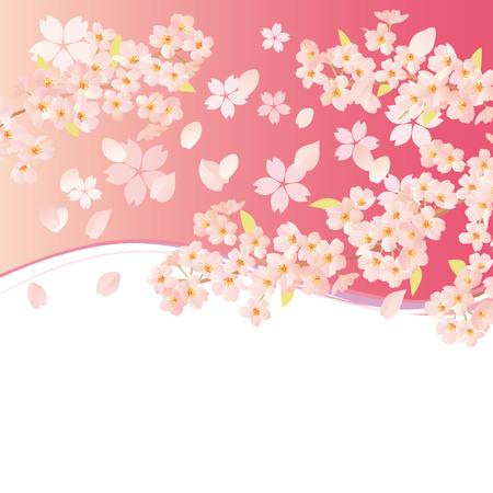 graduate asian: A beautiful cherry blossom illustration Illustration