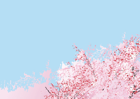 It is a beautiful sakura flower tree with blue sky in the background