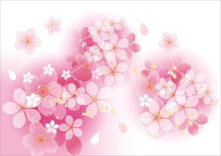 Beautiful sakura flower of Japan