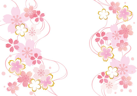 Sakura flowers background in pink and white colors. Illustration