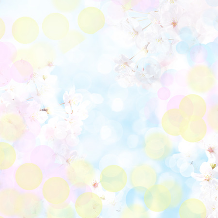 It is a beautiful sakura in Japan
