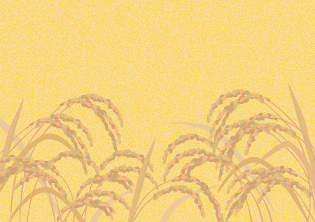Beautiful golden rice