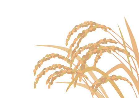 Beautiful golden rice Ilustracja