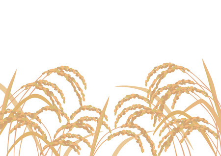 Beautiful golden rice Stock Illustratie
