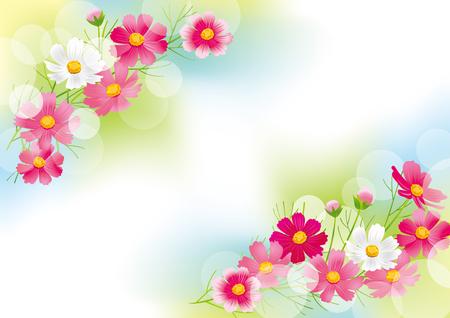 Hermosa flor del cosmos