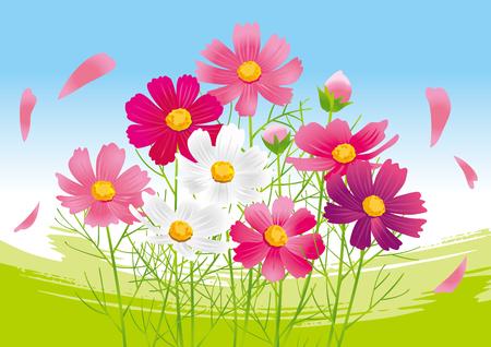Beautiful cosmos flower Illustration