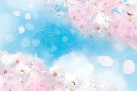 Cherry blossoms illustration of a gentle color