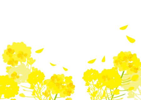 Spring rape flower illustration