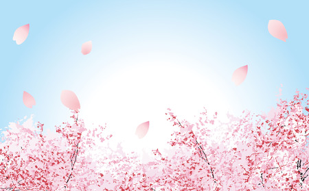 It is an illustration of soft fluffy cherry blossoms 일러스트