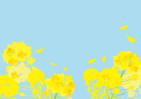 It is an illustration of Springy rape flower.