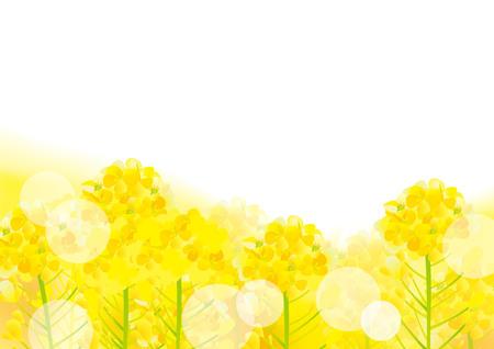 A beautiful rape flower illustration