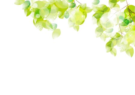 Illustration of fresh leaves in sunbeams Stockfoto