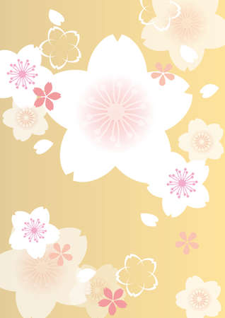 Japanese cherry blossom beautiful cherry background image