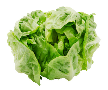 Fresh salad romaine lettuce isolated on white background. Top view. Design element for product label.