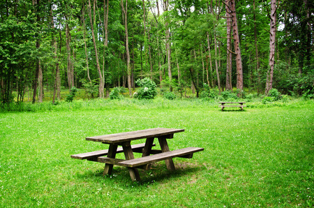 Wooden bench and table on a meadow in the forest. Summer leisure time in the park. Tranquil nature day scene.
