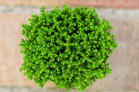 plant pots: Green plant on orange brick floor. Top view. Selective focus. Small dof. Stock Photo