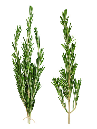 sprigs: Set of fresh green rosemary sprig and bunch of rosemary sprigs tied with rope isolated on a white background. Design element for product label. Stock Photo