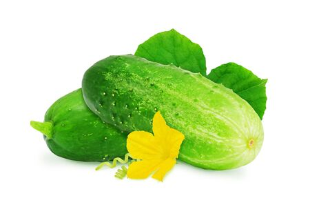 cucumis sativus: Two fresh green ripe cucumber with leaves and flower isolated on white background. Design element for product label, catalog print, web use.