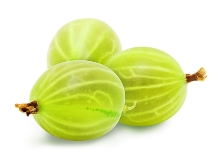 Three fresh ripe green gooseberry berries isolated on white background. Design element for product label, catalog print, web use. Stock Photo