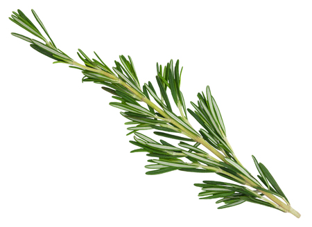 Fresh green rosemary sprig isolated on a white background. Design element for product label, catalog print, web use. Stock Photo