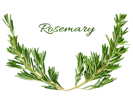 Rosemary frame element forms a place for text or design isolated on a white background. Stock Photo