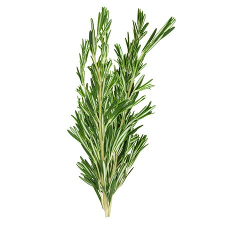Fresh green rosemary sprigs isolated on a white background. Design element for product label, catalog print, web use.