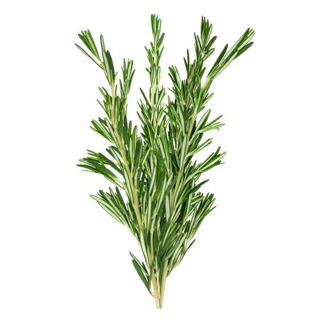 Fresh green rosemary sprigs isolated on a white Stock fotó