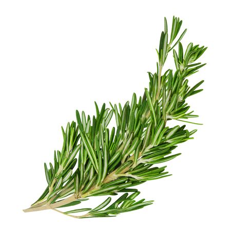 Fresh green curved rosemary sprigs isolated on a white background. Design element for product label, catalog print, web use. Stok Fotoğraf - 150175992
