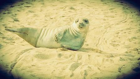 pup: Seal pup on beach Stock Photo