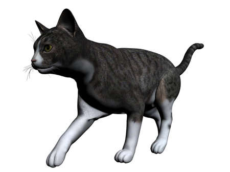 sneak: Cat