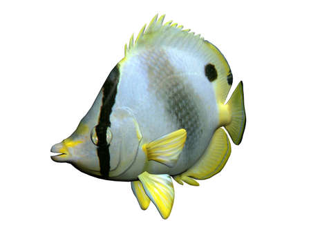 butterflyfish: 3D Illustration of a butterfly-fish