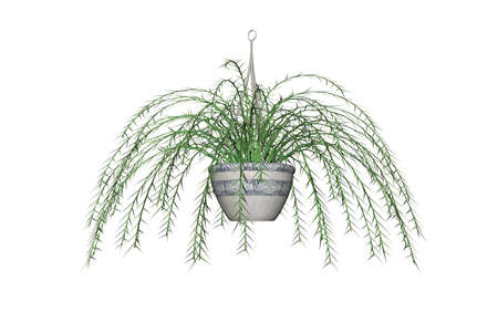 Illustration of an Asparagus Fern, a hanging plant Stock Illustration - 7149291